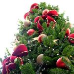 クリスマスツリーを飾る起源・理由は